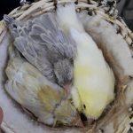 Manuali di Ornitologia, sempre un buon consiglio…